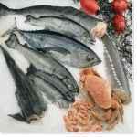 Location vacances en Vendée et tourisme culinaire avec les marchés aux poissons