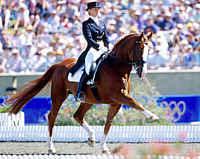 Haras de la Vendée La Roche sur yon, le cheval danse