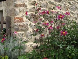 Location vacances et séjour en gîte Vendée, le jardin