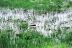 Bon plan vacances près du Sud Vendée, du marais poitevin et ses oiseaux